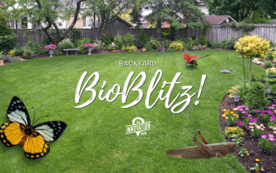 Backyard Bioblitz!