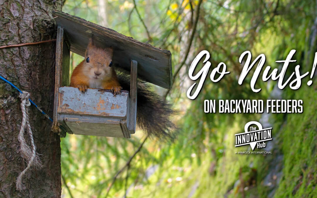 Go Nuts on Backyard Feeders!
